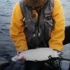 九頭竜川禁漁期中のサクラマスアングラーの生態について