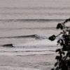 秋のサーフ物語。太平洋の片隅でバニラシェイクに抱かれてサーフボードで走る海原。ニュー・ウエットスーツ海デビュー。