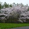 鶴岡市の花・木