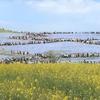 一生に1度は訪れたい!茨城国営ひたち海浜公園のネモフィラ