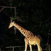 夏にしか体験できない、夜の動物園。東山動植物園「ナイトZOO&GARDEN」に行ってきました!