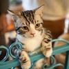 仕草で知る猫の気持ち