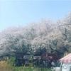 自宅療養の日々④〜お花見満喫〜