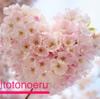 【週刊totonoeru】桜の開花と雨が重なりつつも、春の空気を楽しんだ1週間[習慣化週次レビュー 2018/4 第4週]