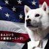 アメリカに留学するなら必須!?ソフトバンクのアメリカ放題とは。