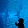 【うみたまご】「あそびーち」という名の触れ合いプールとキッズスペースで、1歳でも楽しめる水族館〈大分〉