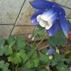 これ、何の花?