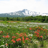秘密の花園「桑ノ木台湿原」