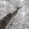 冬の明神平は霧氷の森