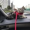 ジル(猫)とドライブ&お散歩 そしてお値段以上ニトリへカーテンをオーダーしに♪