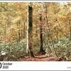 山の自然学カレンダー2020 10月・奥志賀高原・グリーンタフの川を被う錦絨の森