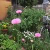 春の庭の移り変わり