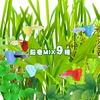 (水草)水草鉛巻きMIX(ミックス) 9種! 前景〜後景までバランス良く揃ったオススメ商品です!【水槽/熱帯魚/観賞魚/飼育】【生体】【通販/販売】【アクアリウム】