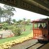 【節約旅deハワイ】ドールプランテーションでパイナップル列車に乗っちゃいました♪ (後編)
