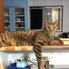 猫の吐き戻しと体調~動物病院での費用とその後のケア