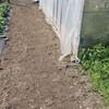 ビニール温室南側の除草