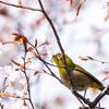🐦野鳥の回【48】やっと見つけた鳥逃げないで!!人類対野鳥の攻防