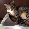 アルミ猫鍋でくつろぐ風ちゃん。