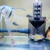 フィッシュレットの導入とドレン排水計画でフンの強制排出を行って水換えを超絶楽にし隊