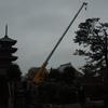 本門寺公園の松の木が!