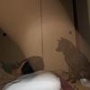 甲斐犬サンの心霊現象の巻〜少シ早クナイ⁈∑(゚Д゚)⁈