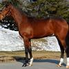 【POG】母はドイツ1000ギニー勝ち馬!ガールズバンドは大型牝馬で飛ぶ走り