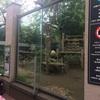 上野動物園 2回目 シャンシャン6回目