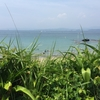 人混みの海は嫌!白浜のプライベート風ビーチ!?臨海浦海水浴場へGO!