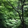 大阪箕面公園・新緑モミジの森で滝道散歩