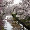 奈良)平城宮跡の桜。佐保川の桜並木。大仏鉄道記念公園の枝垂桜。