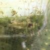 ミナミヌマエビが抱卵していて、まだまだ増えそうですが水温に注意が必要です