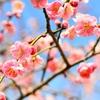 今日は「啓蟄」~三月節の始まり