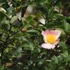 Nikonのデジイチ「D3000」で2016年11月15日までに撮影した写真です。ケヤキやイチョウ紅葉がピークみたいです