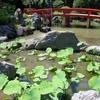 高幡不動尊の池