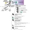 WCry/WanaCry Ransomware Technical Analysis