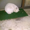 忠猫白ちゃん