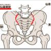 お尻の痛みの原因になる仙腸関節とは?