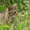 6月5日 荒川沿いを葛飾区まで猫さま歩き とその情景