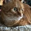 猫と瞑想。