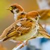 0827【死んだ鳥がゴミ捨て場に】カルガモ親子は奇形の子に友達が。色違いのカルガモ。スズメが新米泥棒【今日撮り野鳥動画まとめ】身近な生き物語