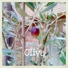 Today's Dog - Olive Tree オリーブの木