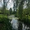 ハンブルクの美しい植物園Loki-Schmidt-Gartenに行きました【ハンブルク遠征演奏5】