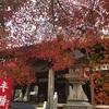 名古屋観光無料イベント情報 秋はもみじ寺、犬山寂光院の紅葉と桃太郎神社で謎を解け!