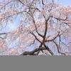 地元で桜始動!!「天野山 金剛寺」Ⅳ