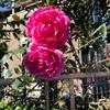 2020-11-04 青空と花と?