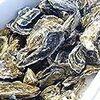 寒くなると、更に美味しく感じる牡蠣。 牡蠣にあたらない方法