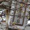 【写真加工】近江八幡市安土/沙沙貴神社の蝋梅(ロウバイ)を咲かす!