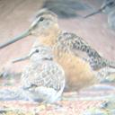 関東在住の学生による野鳥観察記録