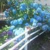 #312 梅雨の時期にもってこいの植物
