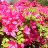 花の名所に行かずとも!住宅街で楽しめる花